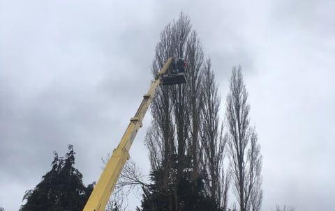 cherrypicker_tree_surgery_crowning